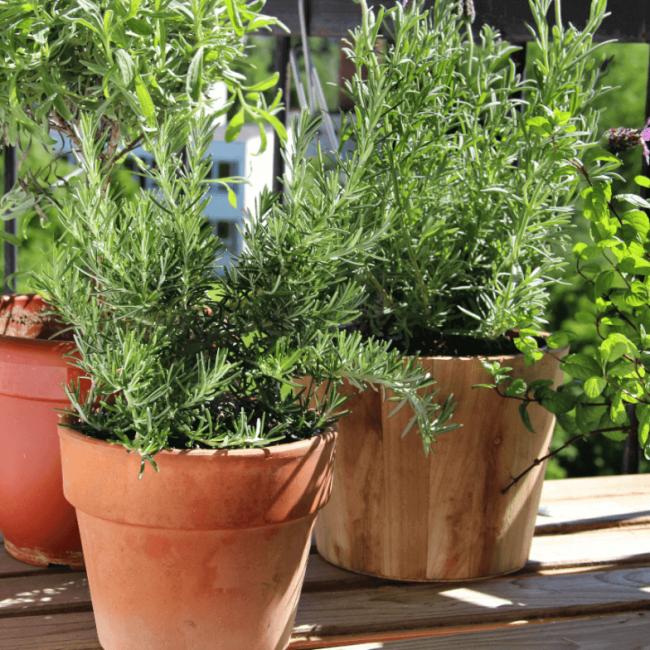Como ter uma horta em apartamento   Blog - Vila Brasil Engenharia