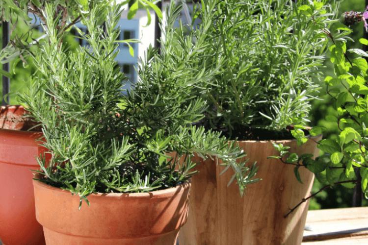 Como ter uma horta em apartamento | Blog - Vila Brasil Engenharia